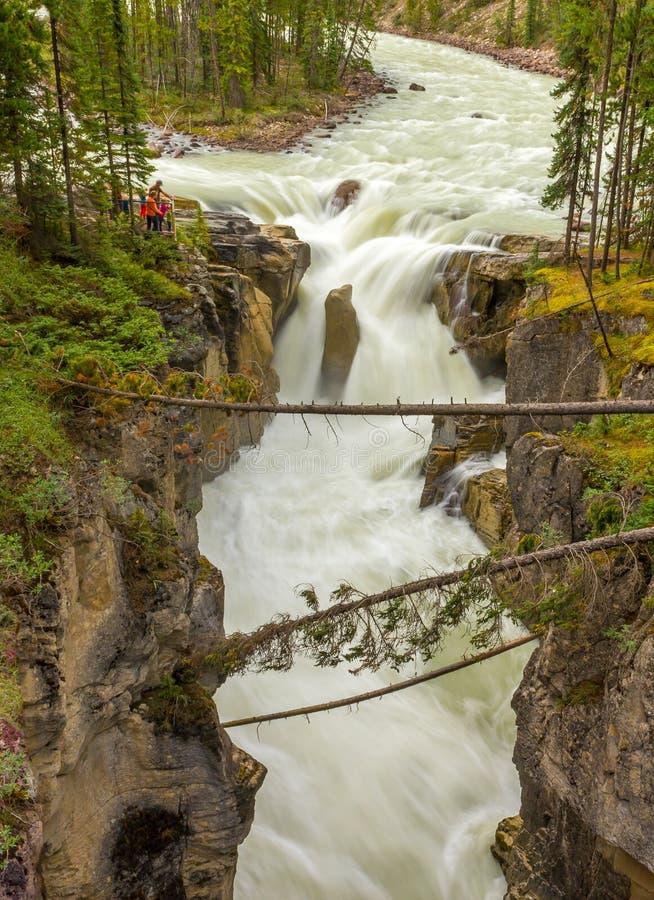 Sunwapta Falls Jasper National Park photographie stock libre de droits