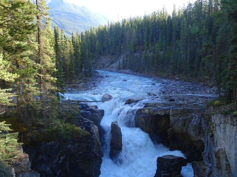 Sunwapta Falls in Jasper National Park in Alberta, Kanada lizenzfreie stockfotografie