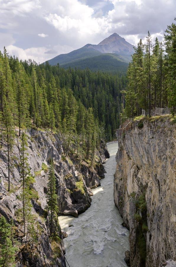 Sunwapta vattenfall arkivbild