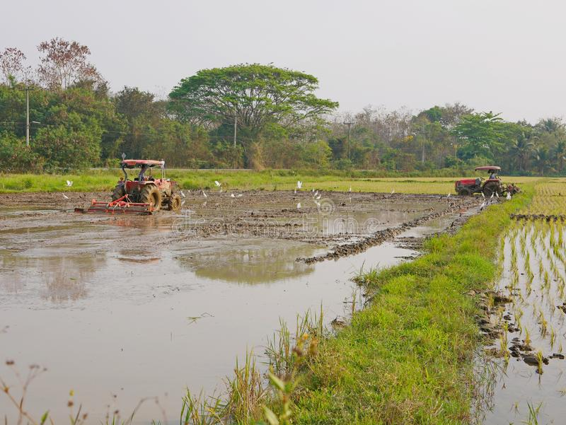 Suolo bagnato/sommerso in una risaia che è arata dall'trattori nel pomeriggio caldo in una zona rurale nel Nord della Tailandia fotografia stock libera da diritti