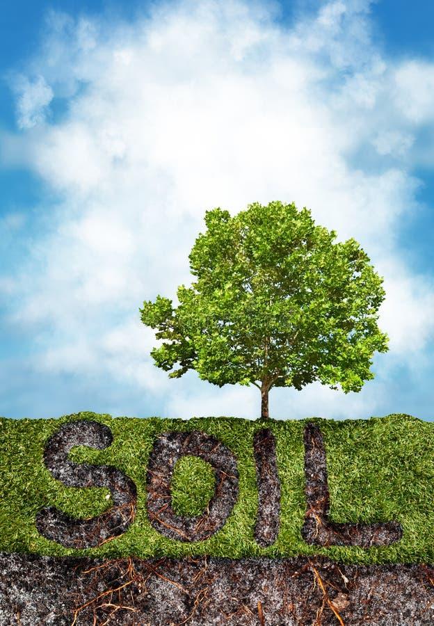 Suolo ed erba sotto l'albero immagine stock libera da diritti