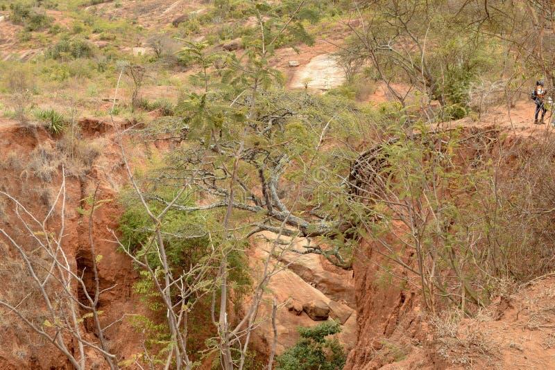 Suolo eroso con pochi alberi dell'acacia, pianure di Kilome, Makueni County, Kenya immagine stock