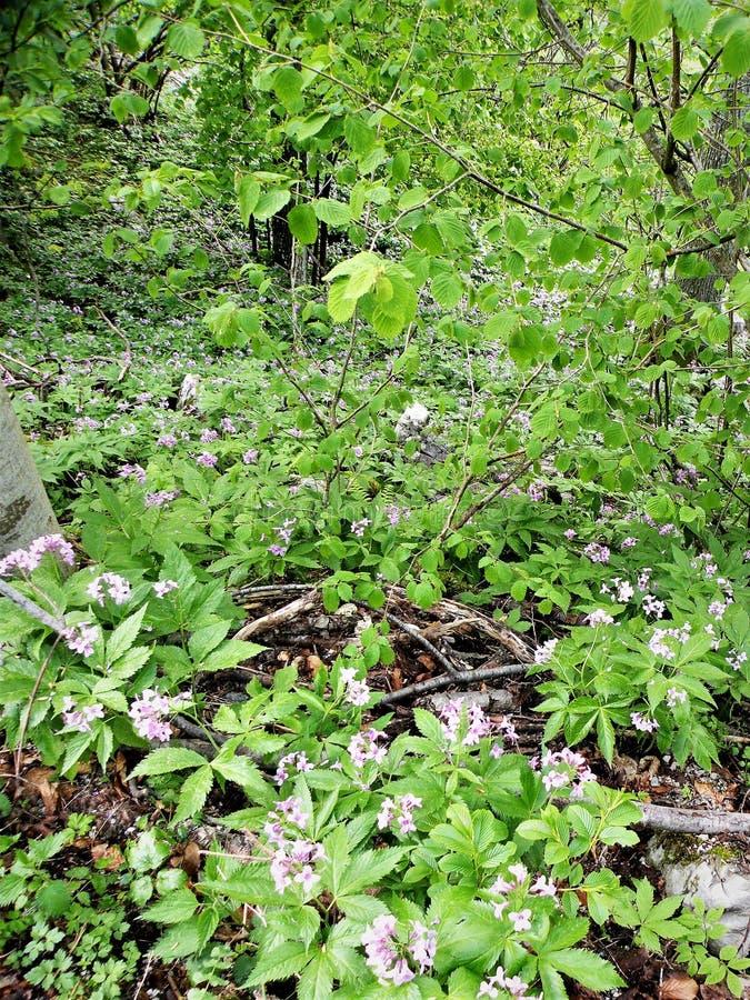 suolo verde in fiori selvaggi della foresta immagine stock libera da diritti