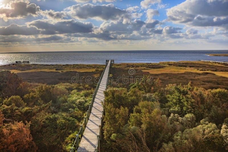 Suono Autumn Salvo North Carolina Outer Banks di Pamlico del sentiero costiero fotografia stock