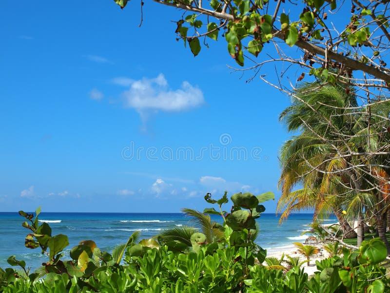 Suono del sud dei Cayman Islands fotografia stock libera da diritti