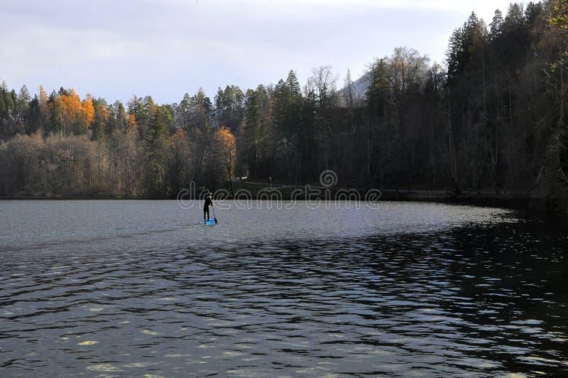 Sup, tribune op peddel, op Afgetapt Meer, Slovenië, Europa Mens die op het meer in de herfst roeien stock fotografie