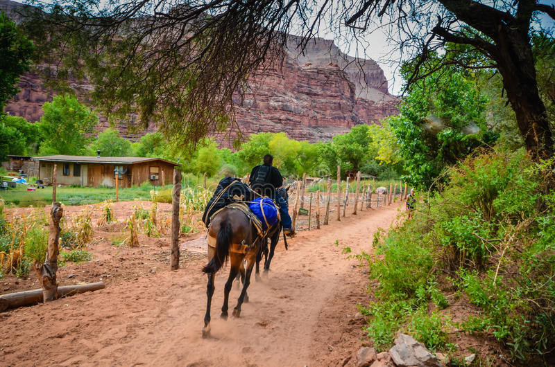 Supai Village - Hualapai Tribal Land. Rural Native American village amidst red rock cliffs stock images