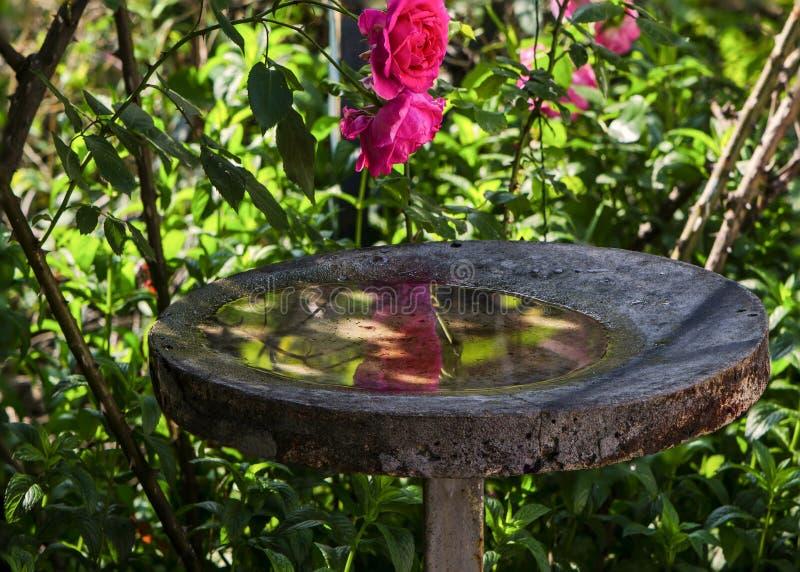 Supare för fåglar royaltyfri foto