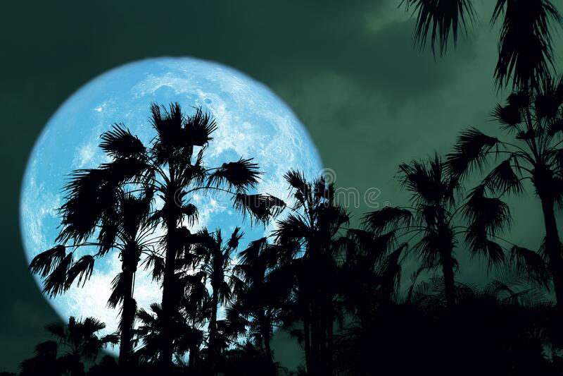 Super Blue Full Hunger Moon sul cielo notturno dietro silhouette palma fotografia stock libera da diritti