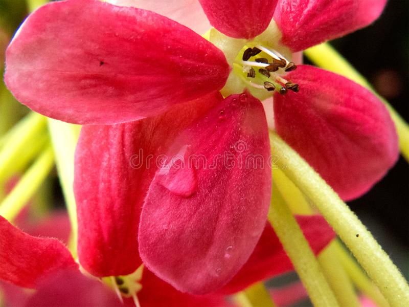 Super close macro of flower. stock photography