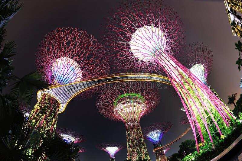Super drzewa w Ogródach Podpalany Singapur obraz stock