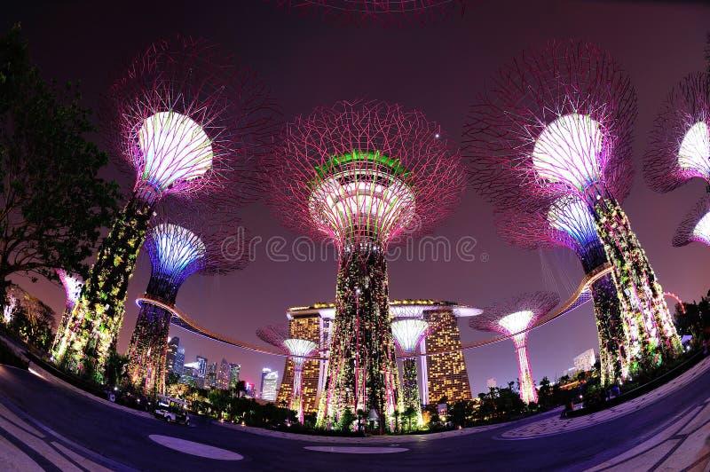 Super drzewa w Ogródach Podpalany Singapur zdjęcia stock