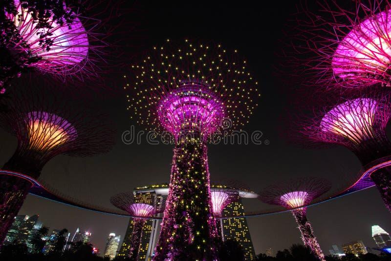 Super drzewna paza przy ogródami zatoką zdjęcie royalty free
