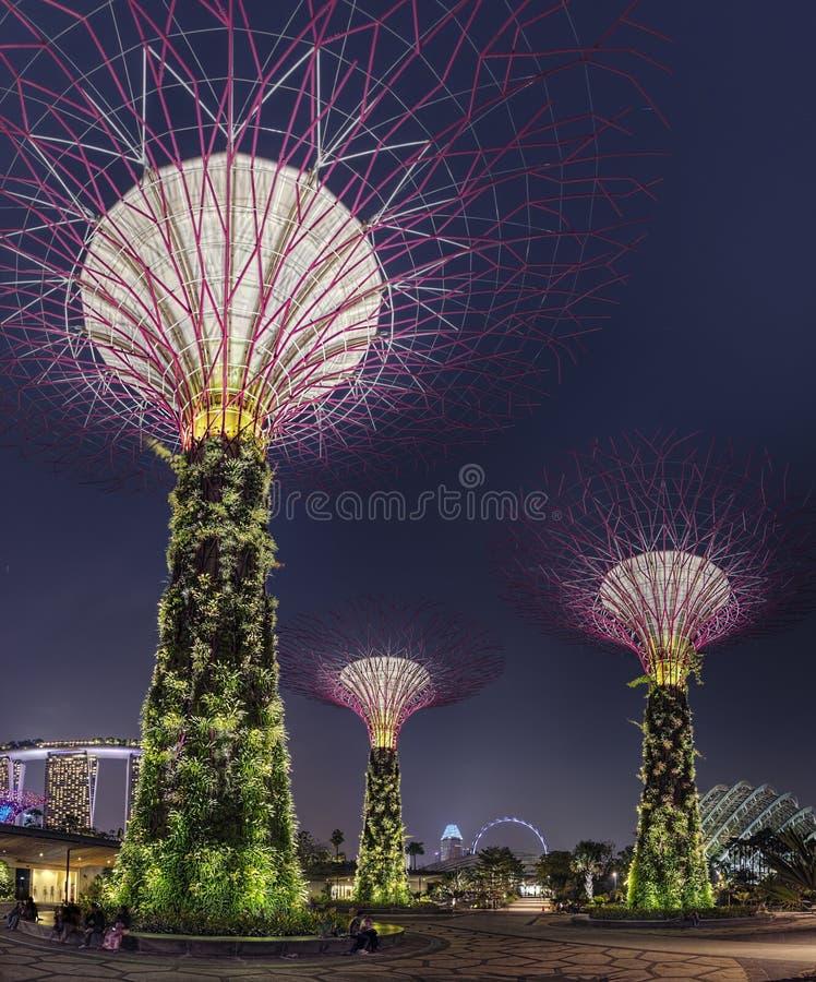 Super drzewo nocy scena przy Singapur ogródami zatoką zdjęcia stock