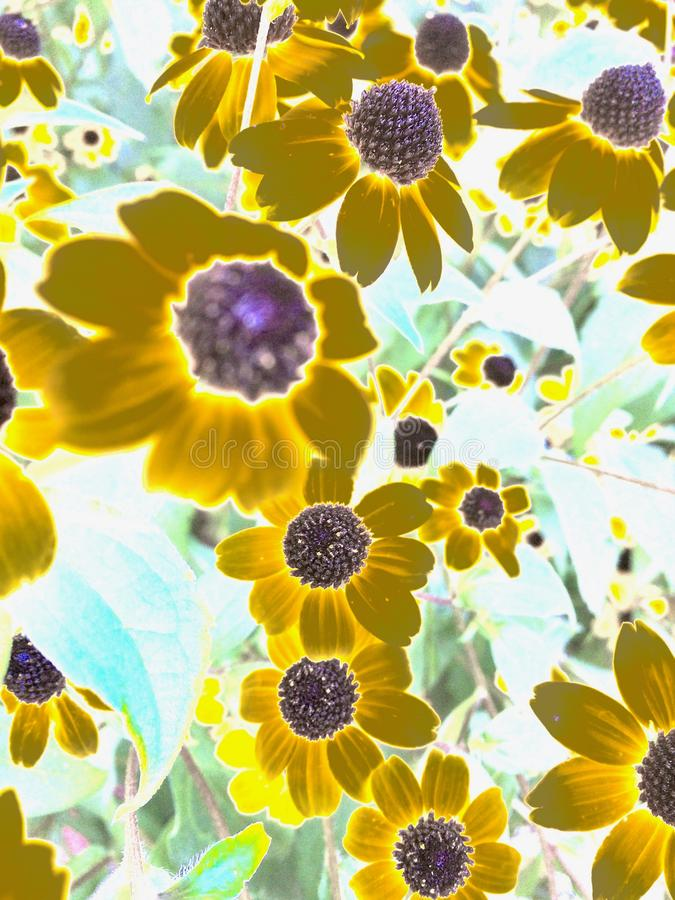 Funky daisies under radiation full of light royalty free stock images