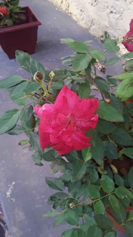 Super flower stock photos