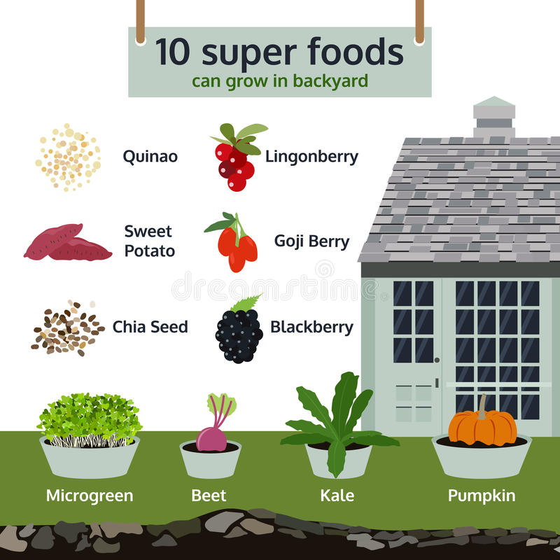 10 super foods can grow in backyard, infographic food vector. Illustration stock illustration