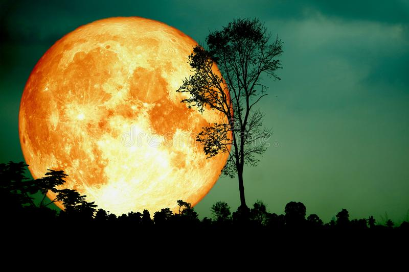 super full blood moon back silhouette branch tree dark forest gr stock image
