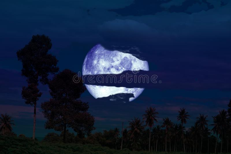super full harvest moon on night sky back silhouette tree and cloud royalty free stock photo