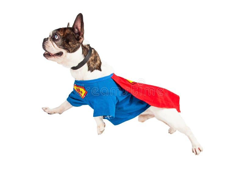 Super Hero Dog Flying Over White stock images
