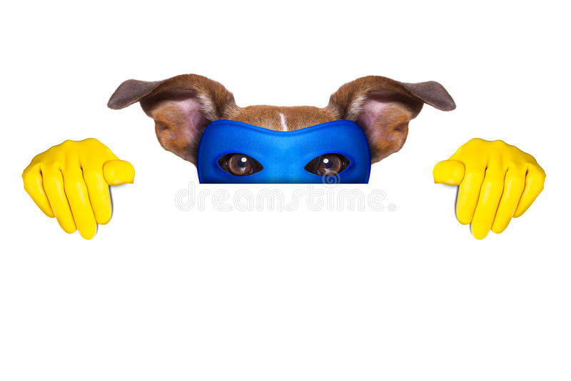 Super hero dog royalty free stock photography