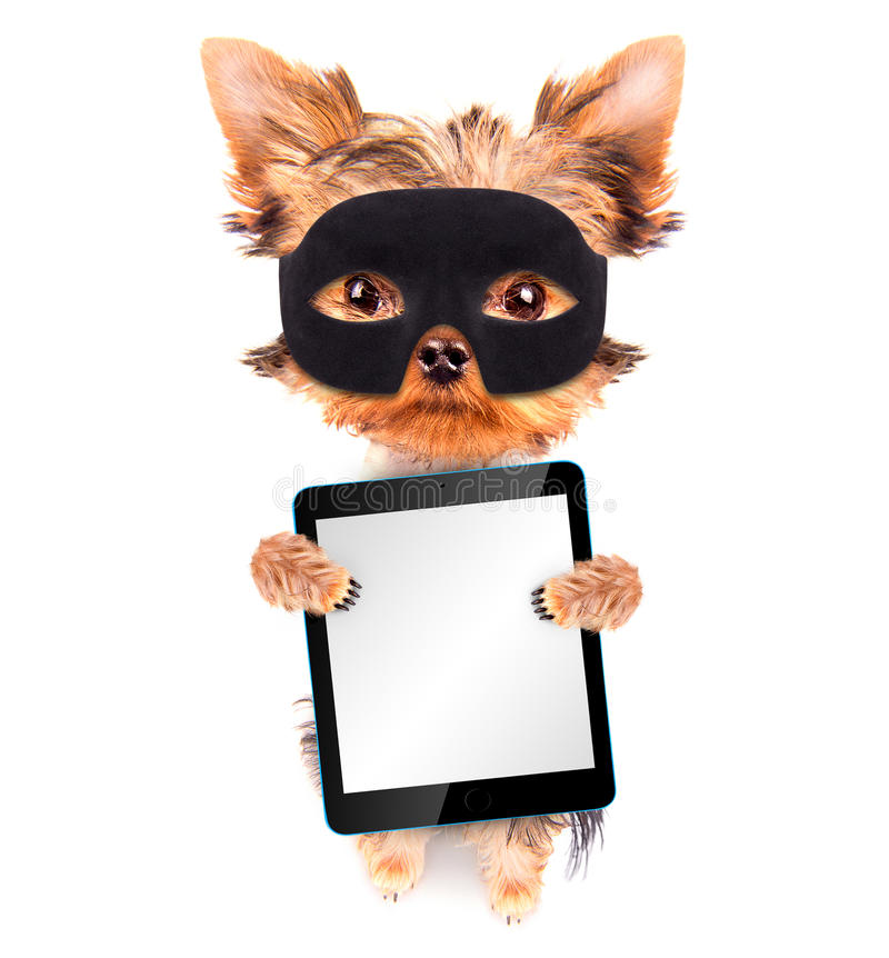 Super hero puppy dog with tablet pc royalty free stock photos
