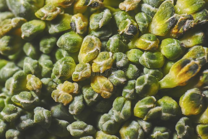 A super macro broccoli. Texture stock photo