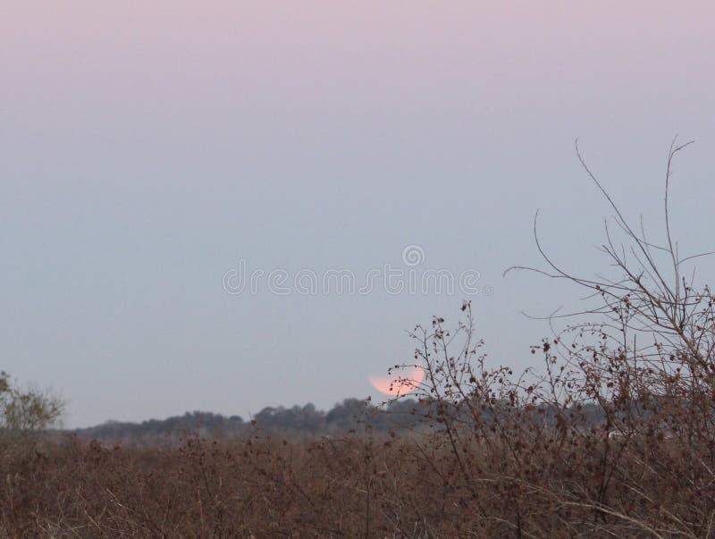 Super Mond und Eklipse des blauen Bluts stockbilder