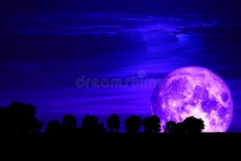 super purple snow moon back silhouette tree on dark sky stock photo