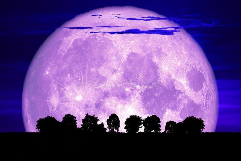 super purple snow moon back silhouette tree on dark sky royalty free stock photo