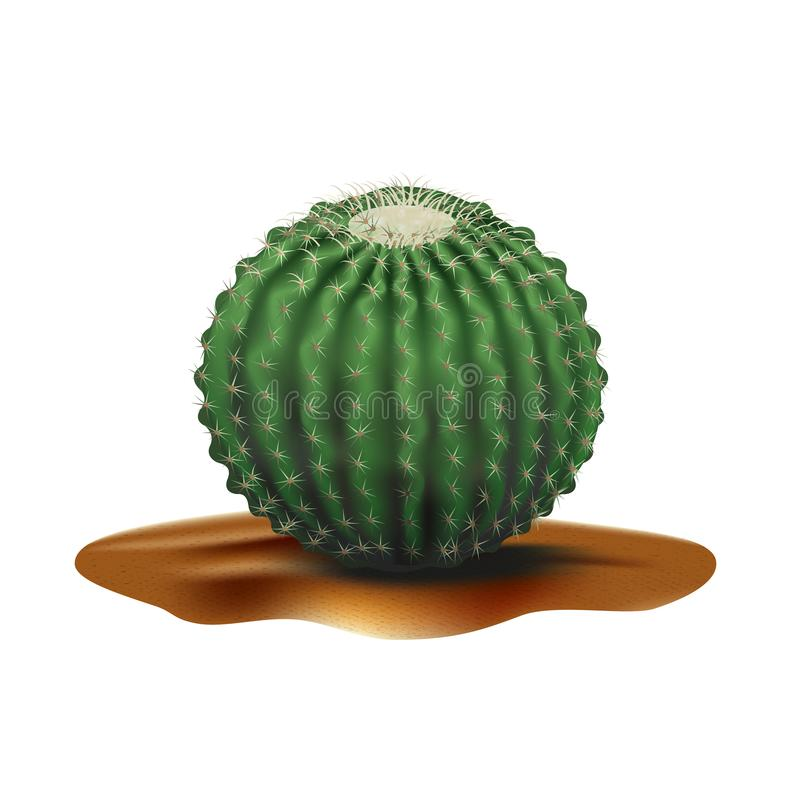 Super Realistic desert big round cactus Echinocactus. Plant of desert among textured gradient sand. Realistic 3d volume vector royalty free illustration