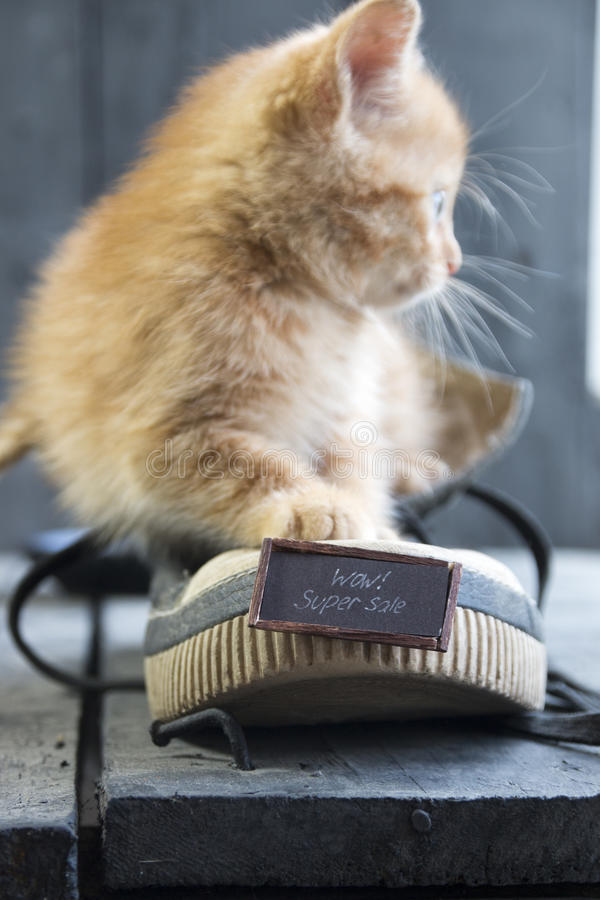 Super sale idea or Sale and discounts. Text and kitten. Cute little ginger kitten and text - Wow Super sale stock images