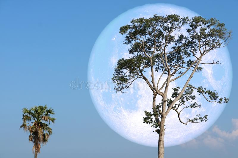 super strawberry moon on night sky back over silhouette tree stock image