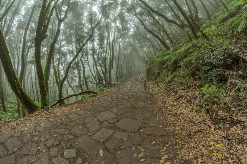 Super szeroka kąt panorama Reliktowy las na skłonach Garajonay parka narodowego góry Gigantyczni bobki i Drzewny wrzos zdjęcia stock
