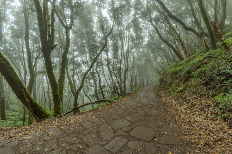 Super szeroka kąt panorama Reliktowy las na skłonach Garajonay parka narodowego góry Gigantyczni bobki i Drzewny wrzos zdjęcie royalty free