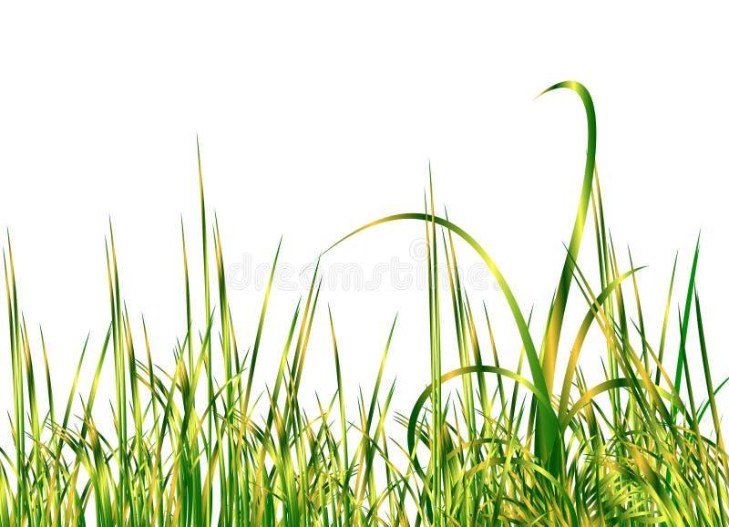 super trawę green royalty ilustracja