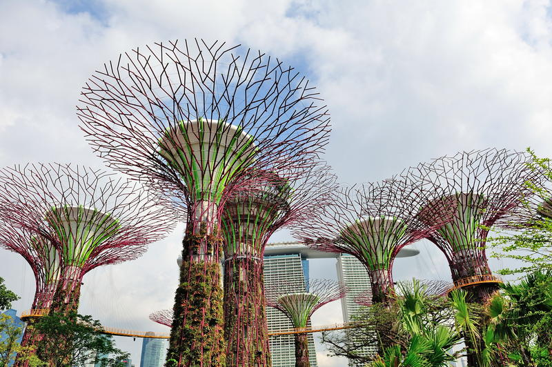 Download Super Trees At Gardens By The Bay Stock Image - Image of architecture, skyway: 25569773