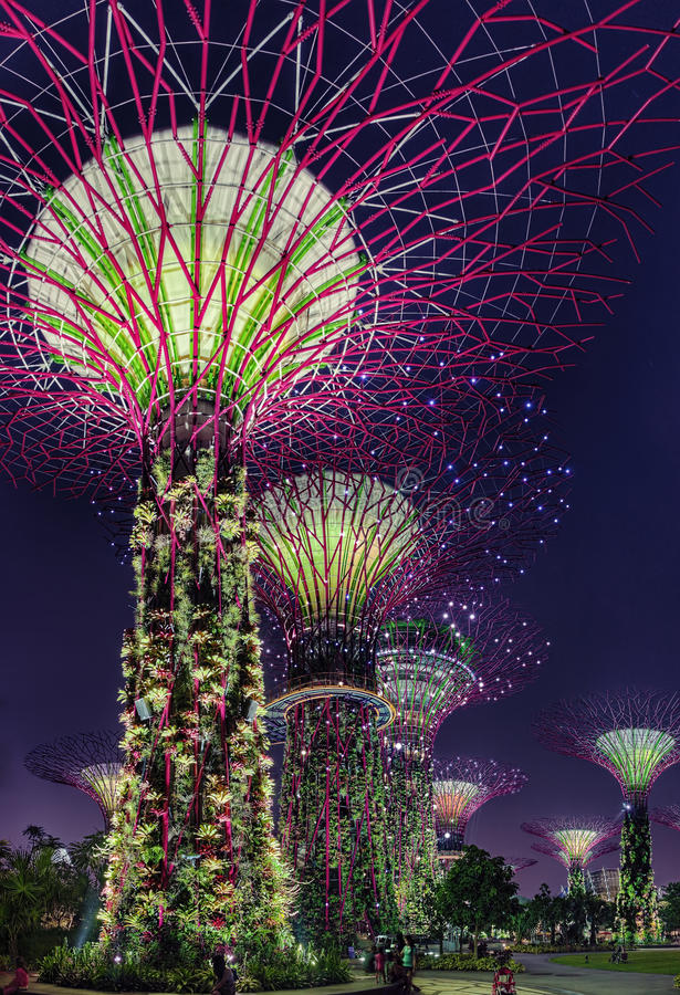 Free Super Trees Night Scene At Singapore Gardens By The Bay Stock Image - 31888861