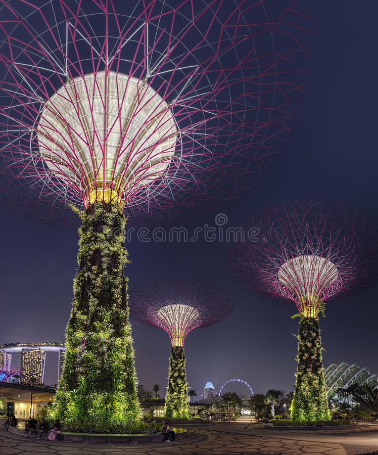 Super Trees Night Scene at Singapore Gardens by the Bay stock photos
