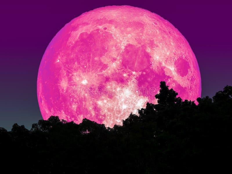 super volledige roze maan en silhouetboom in bosster op hemel vector illustratie
