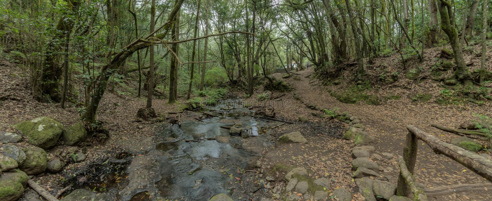 Super wide angle panorama. Relict forest on the slopes of the Garajonay National Park mountains. Giant Laurels and Tree Heather. Along narrow winding paths royalty free stock image