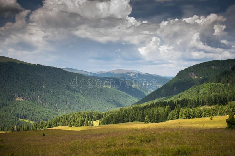 A superb mountain scenery. Many fir trees, green grass and a blue sky with many clouds. A dramatic sky. Picture of mountain royalty free stock images