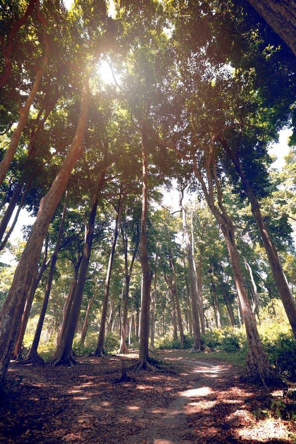 Superb sikt av en bana till och med skog royaltyfri fotografi