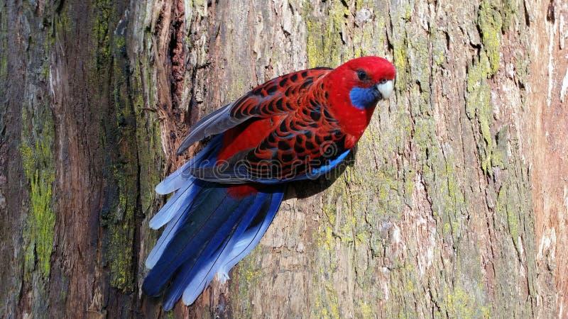 ¡Superbird! imagenes de archivo