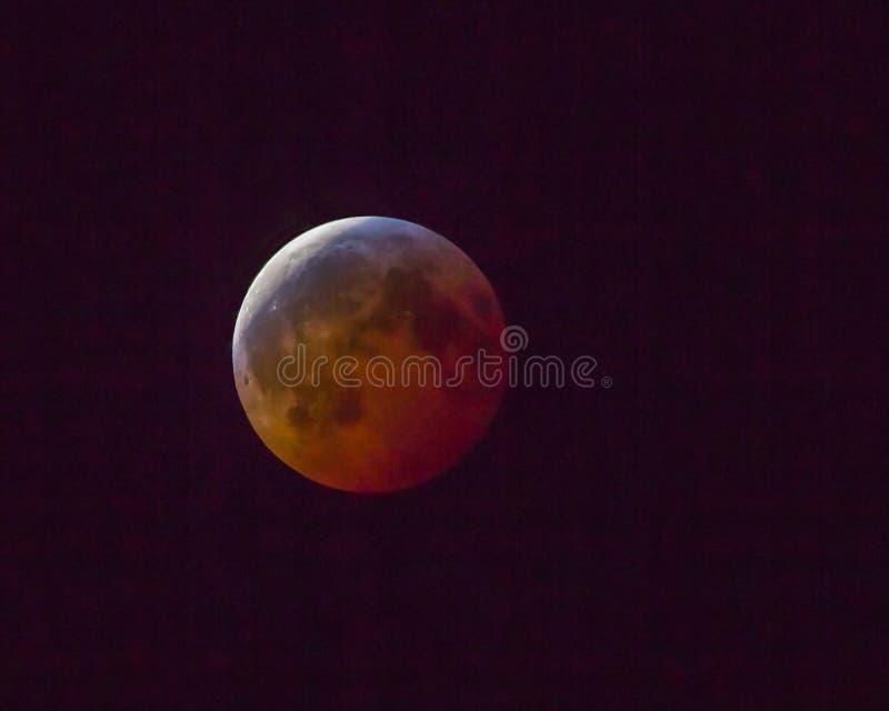 2019 Superblut Wolf Moon stockfotos