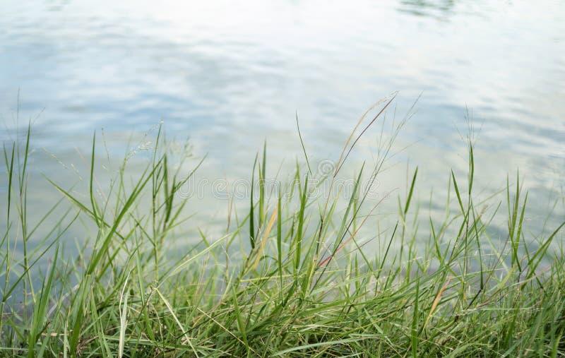 Superfície da água com ondinhas e reflexões da luz solar imagem de stock