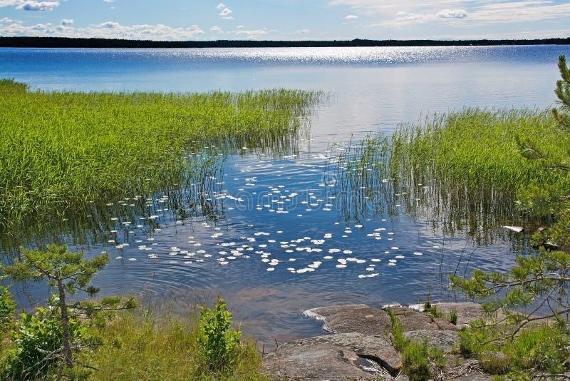 Superfície da água com waterlily as folhas fotografia de stock