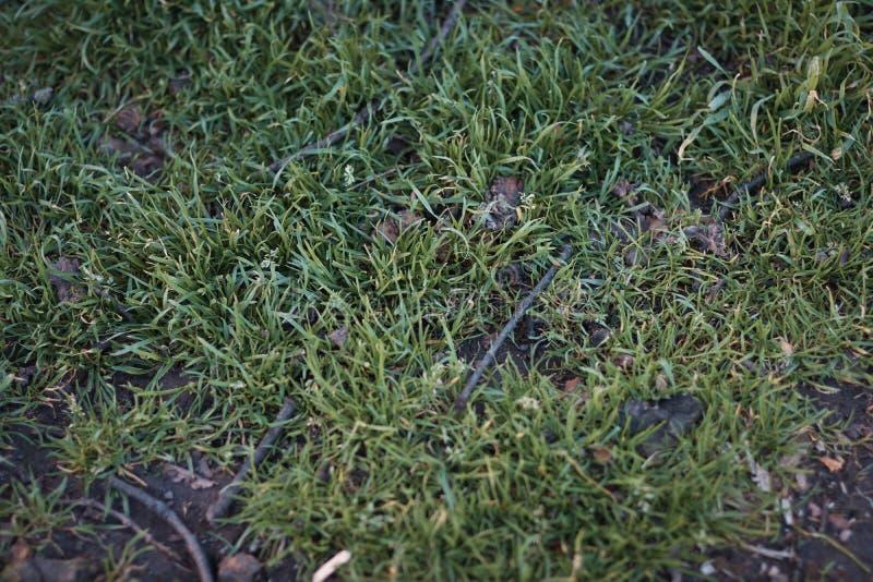 Superfície da grama verde fotografia de stock royalty free