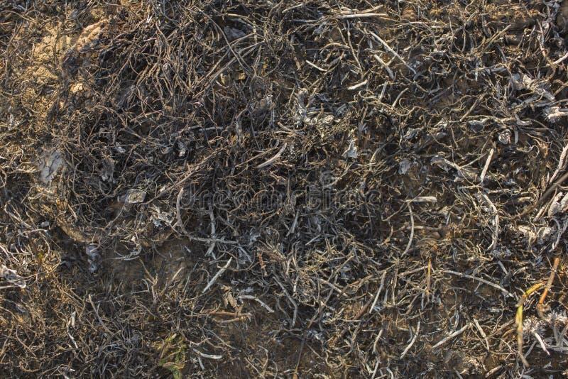 A superfície da terra coberta com a cinza foto de stock royalty free