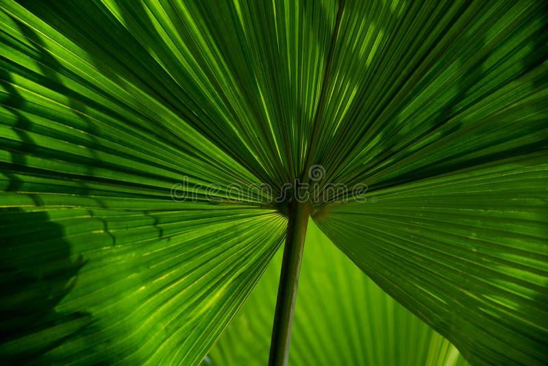 Superfície das texturas das folhas verdes das palmeiras fotos de stock royalty free